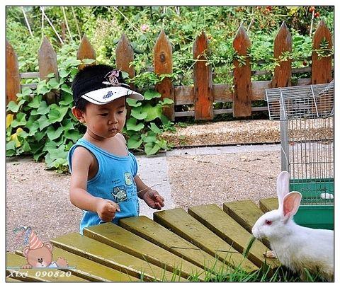 第一次看见小白兔