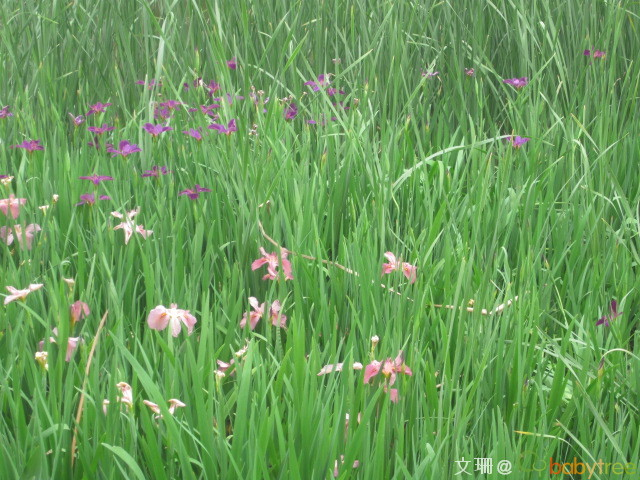 ,漂亮吧   爬山虎爬的形状真好看   可爱的水仙花
