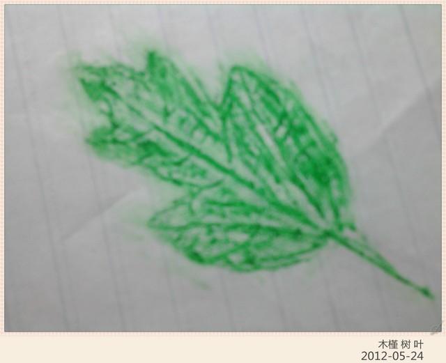 树叶标本 拓画