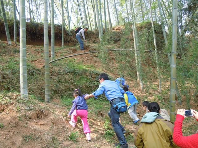 宜兴竹林挖竹笋图片