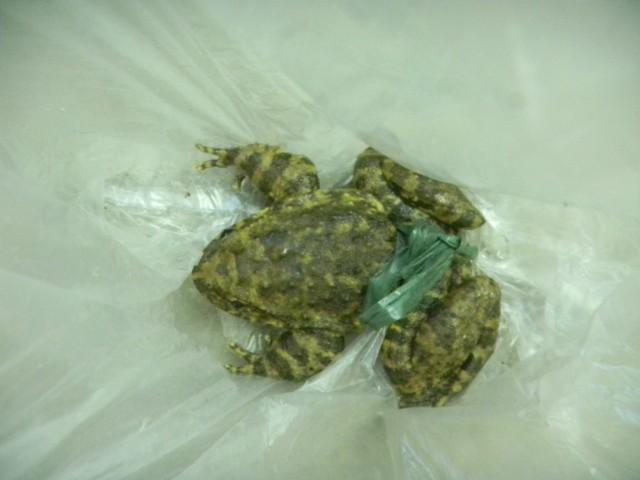 石蛙蝌蚪吃什么_乡下哥哥抓来野生石蛙,宝宝吃了不会长痱子,清热解毒,_如题 ...