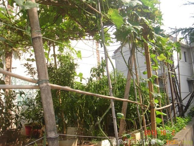 外婆家的小菜园